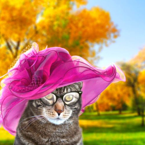 Sundays With Tabs the Cat, Makeup and Beauty Blog Mascot, Vol. 682