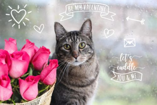Sundays With Tabs the Cat, Makeup and Beauty Blog Mascot, Vol. 646