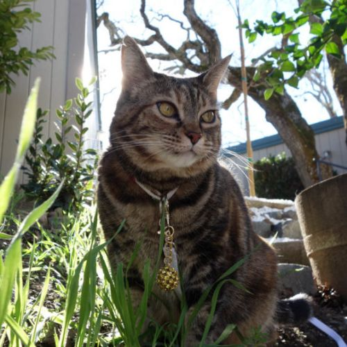 Sundays With Tabs the Cat, Makeup and Beauty Blog Mascot, Vol. 647