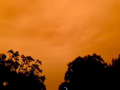 Checking In: A CRAZY Orange Sky, Maine Coon Cats and Kitten Fur Perfume