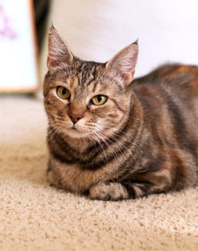 3 Important Cat-Related Housekeeping Items of Note
