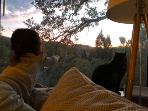 Sundays With Tabs the Cat, Makeup and Beauty Blog Mascot, Vol. 681