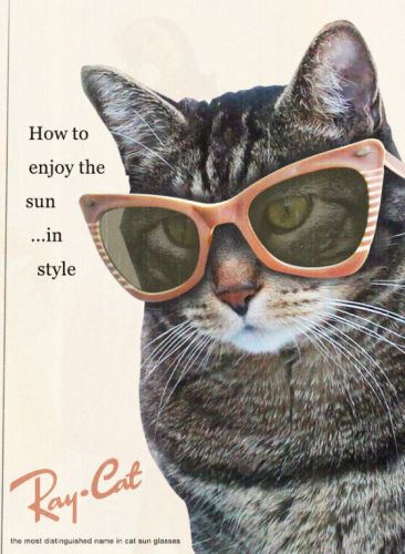Sundays With Tabs the Cat, Makeup and Beauty Blog Mascot, Vol. 670